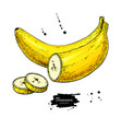 banana sliced piece drawing isolated hand vector image