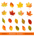 Set Colorful Autumn Leaves - in Watercolor Style vector image