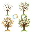 Apple tree seasonal cycle vector image