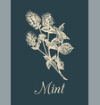 mint hand drawn aromatic vector image