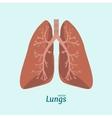 Human Lung Anatomy Card vector image