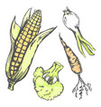 vegetables at random in graphic design collection vector image