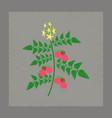 flat shading style tomato plant vector image