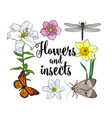 square frame of insects and flowers with place for vector image