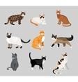 Set of cute cartoon kitties or cats vector image