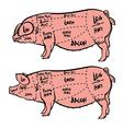 Hand drawn pig diagram Butcher diagram vector image