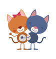 colorful caricature with couple of cats embraced vector image