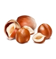 Hazelnuts with leaves vector image