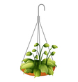 A hanging green plant vector image vector image