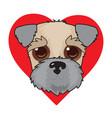 wheaten terrier face vector image vector image