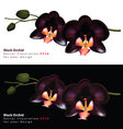 black orchid background vector image