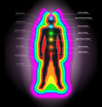 auras and chakras vector image
