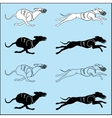 Set of silhouettes running dog whippet breed vector image