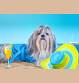 shih tzu dog vacation vector image