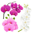 Orchid flowers realistic colorful set vector image
