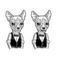 dog hipster in bow tie and shirt vintage engraving vector image