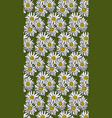 seamless pattern with chamomile vector image