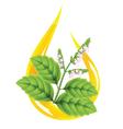 essential pogostemon oil vector image vector image