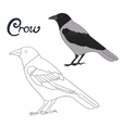 Educational game coloring book crow bird vector image