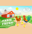 chicken farm advertising background vector image
