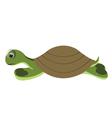 green turtle vector image