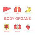 body organs cartoon set vector image