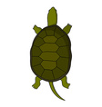 Hand drawn tortoise in cartoon style vector image