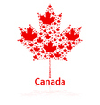 Canadian maple leaf vector image