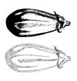 Hand drawn eggplant vector image