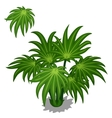 Green bush tropical plants on a white background vector image