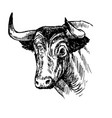 hand drawn of bull vector image