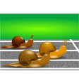 snails on a racetrack vector image