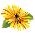 Bee on a yellow daisy vector image vector image
