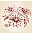 daisy hand drawn llustration sketch vector image