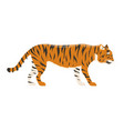 tiger action wildlife animal danger mammal fur vector image