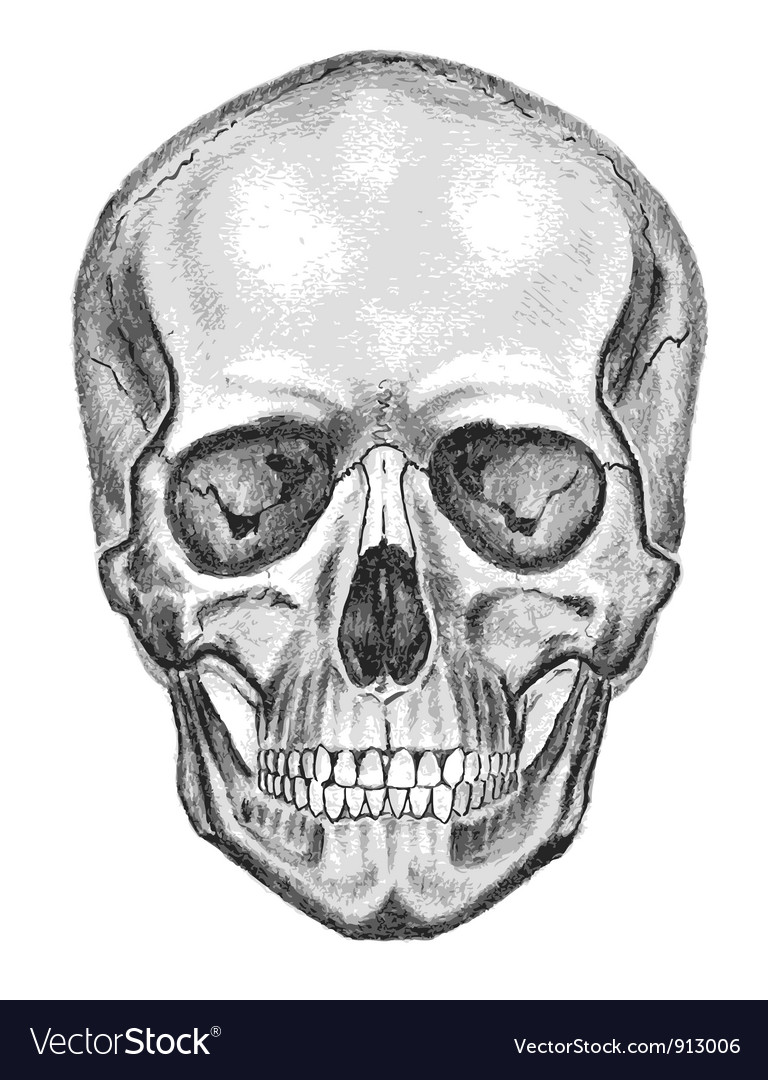 Skull trace dont easy edit vector