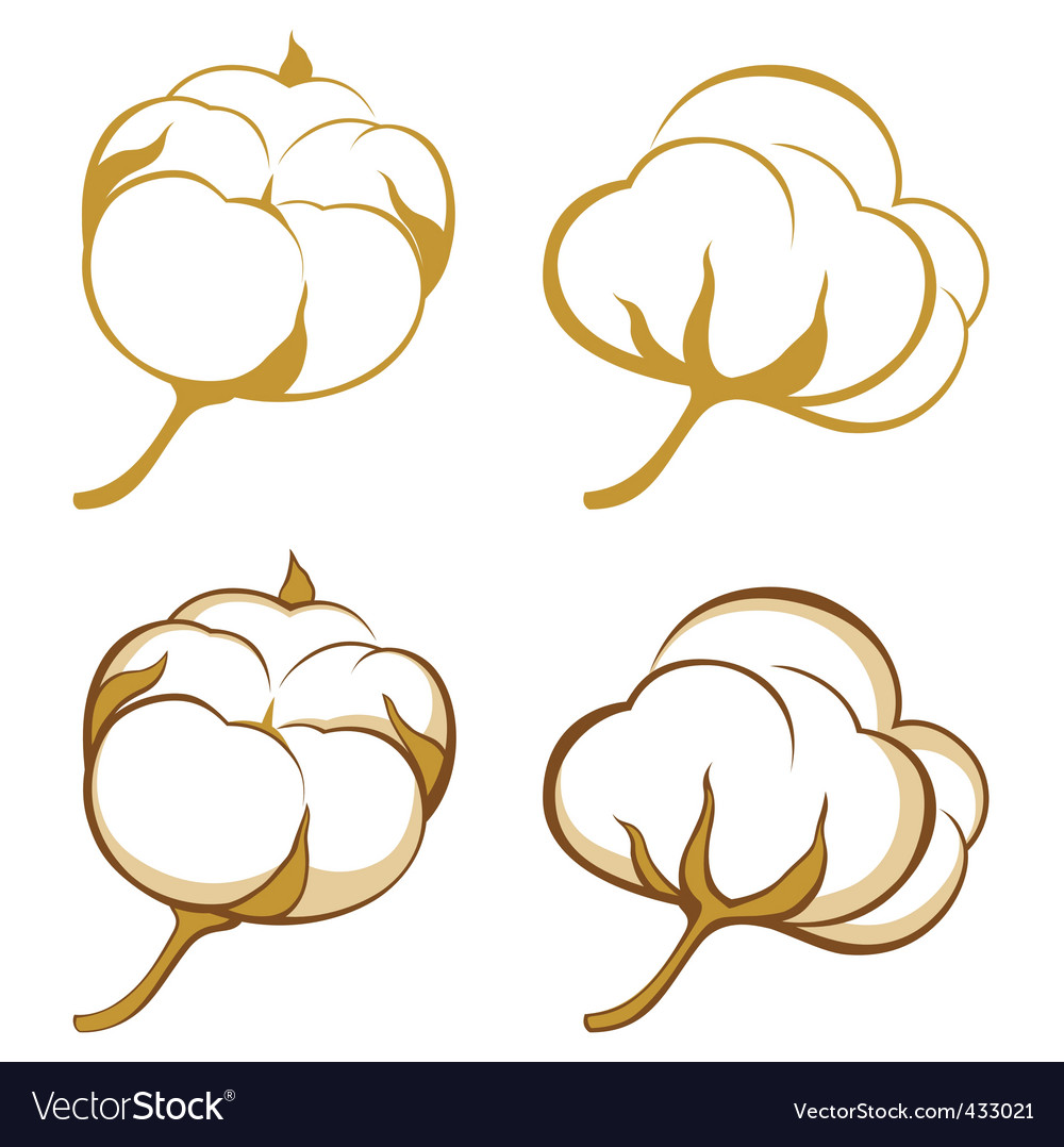 Cotton plants vector