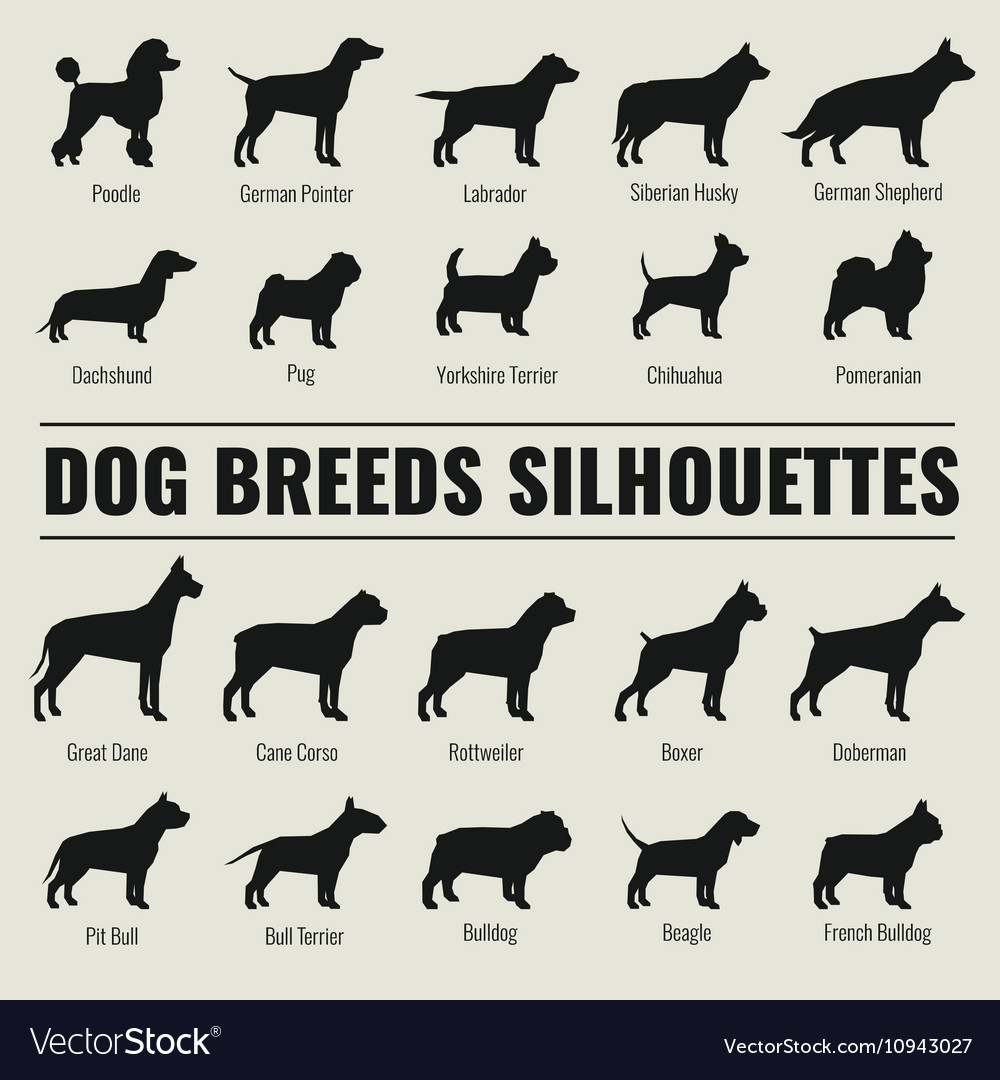 Dog breeds silhouettes set vector