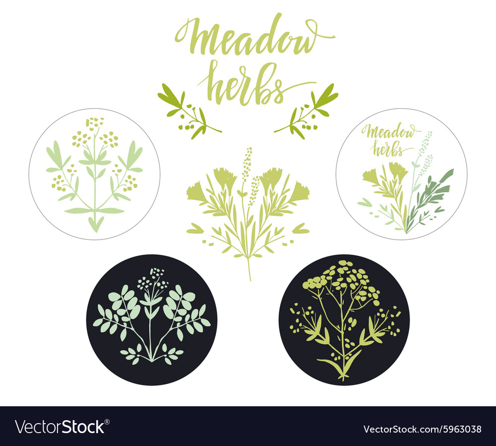 Set of six additional decorative elements for vector