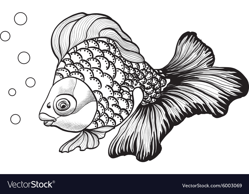 Goldfish3 vector