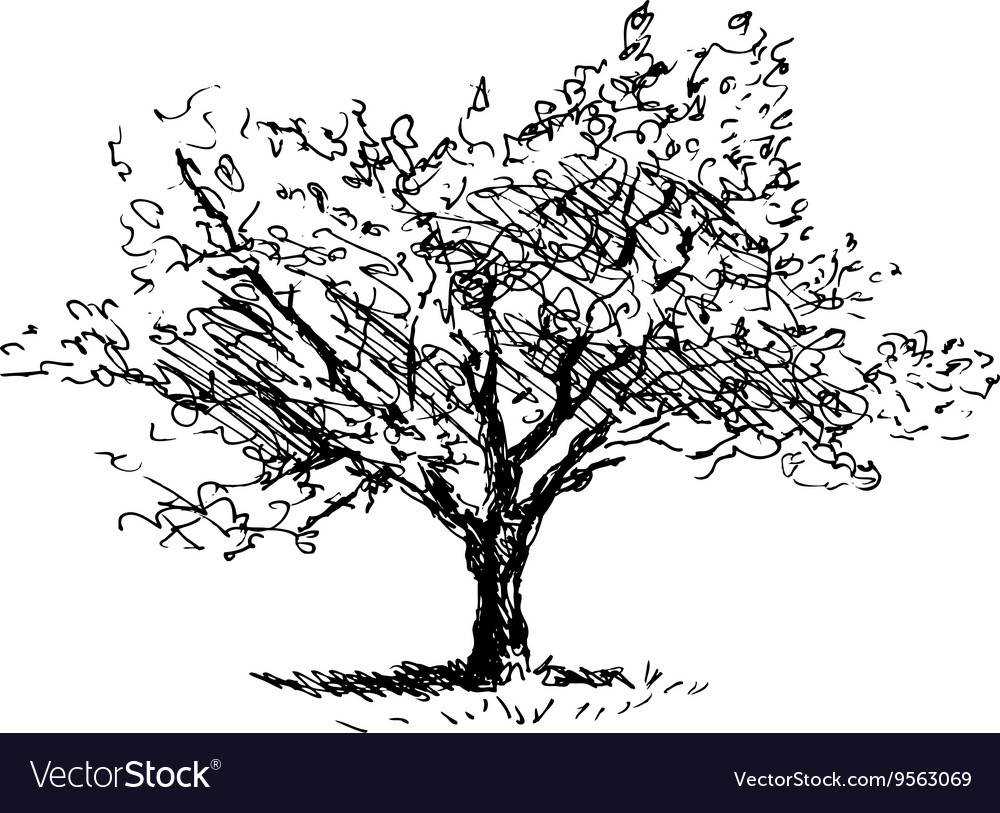 Hand sketch tree flowering cherry vector