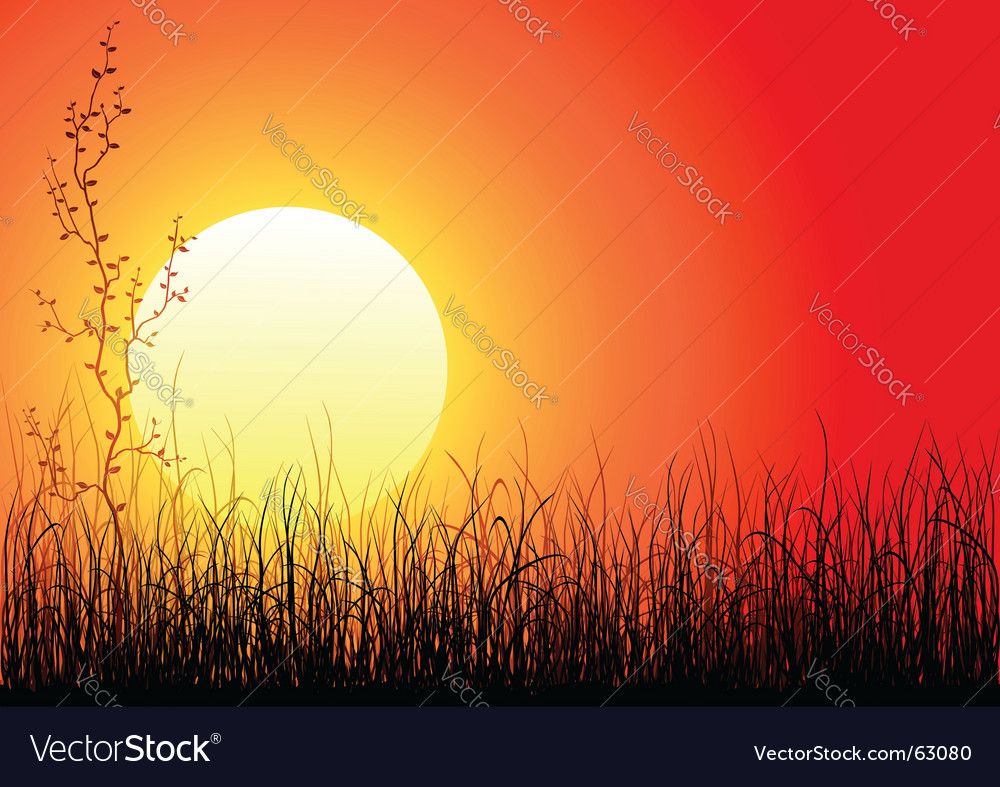 Magic sunset vector