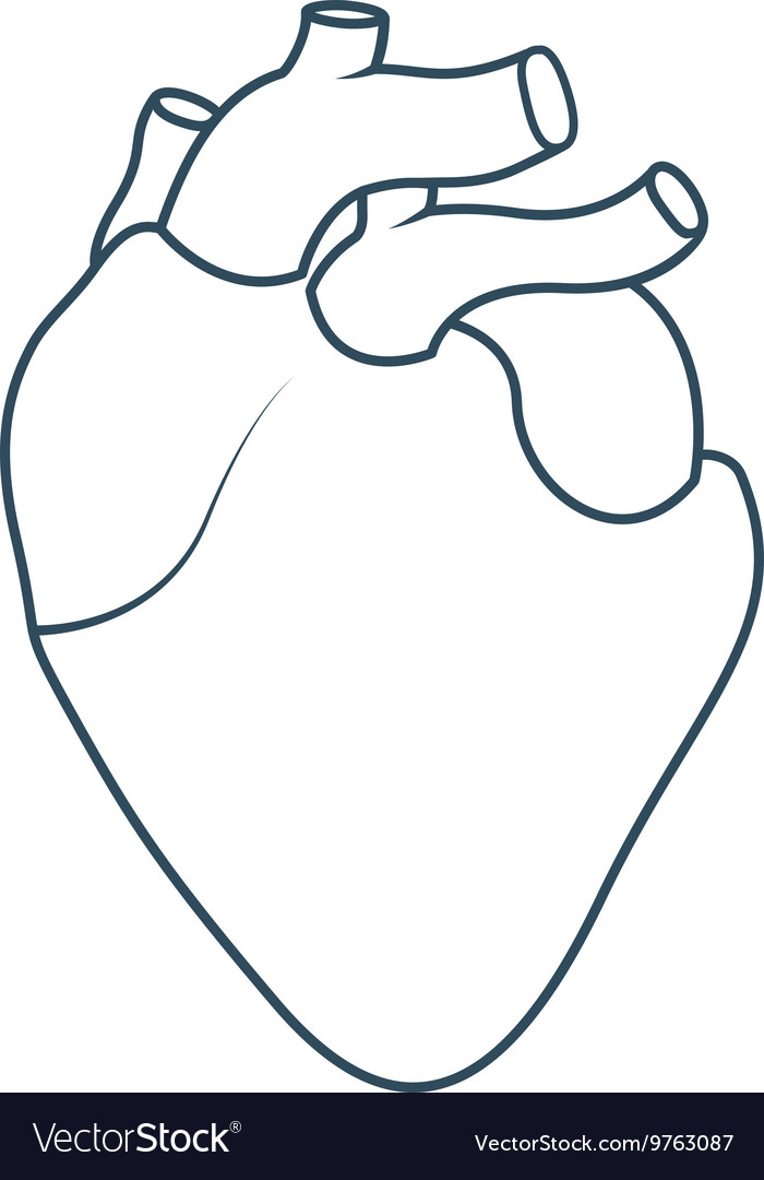 Human heart anatomy isolated icon design vector