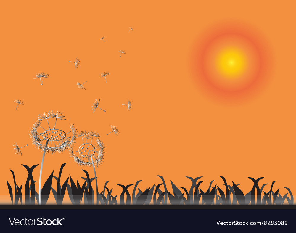Dandelion on sunset spring flower background vector