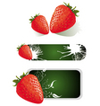 strawberry food design vector image vector image
