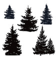 pine trees and spruce vector image