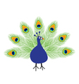 Peacock open tail Feather out Beautiful Exotic vector image