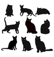 Breed cats silhouette in different poses vector image