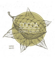 cocoa beans engraved vintage vector image