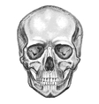Skull Trace dont easy edit vector image